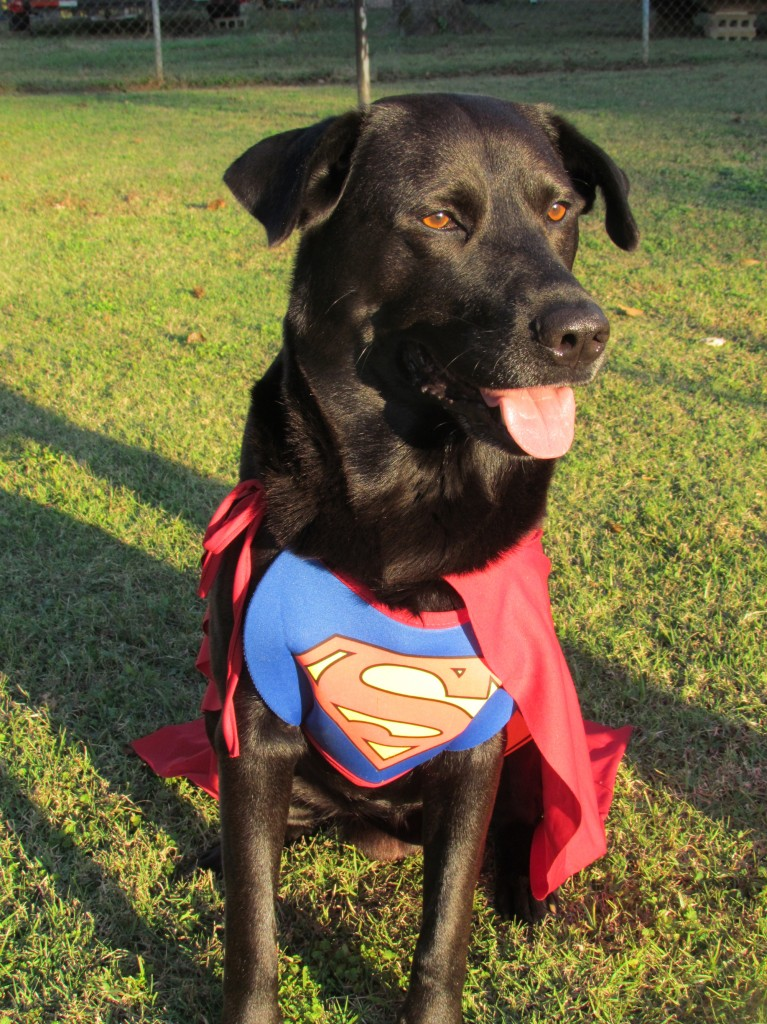 Black Lab Costume