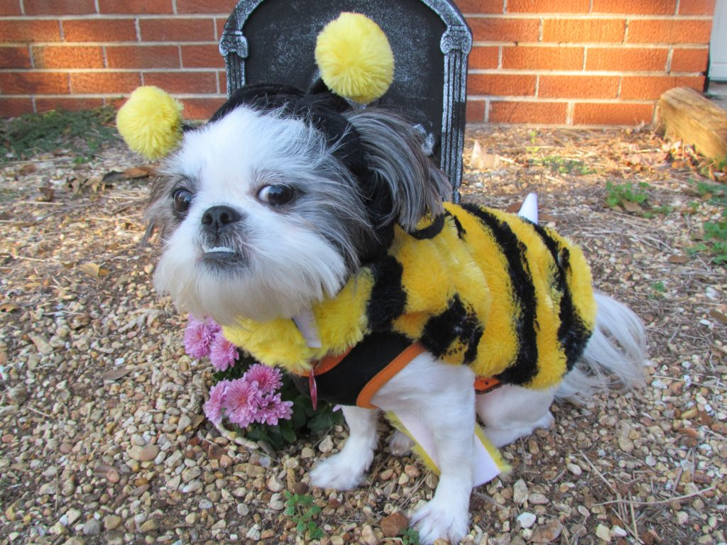 Shih Tzu Bumble Bee
