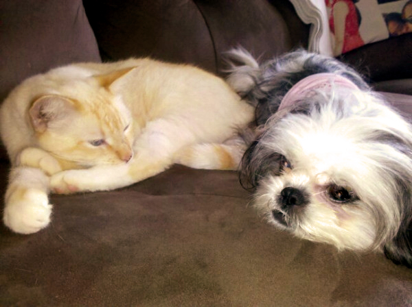 Dog and Cats Together