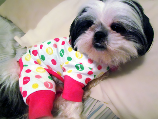 shih tzu puppy in pajamas