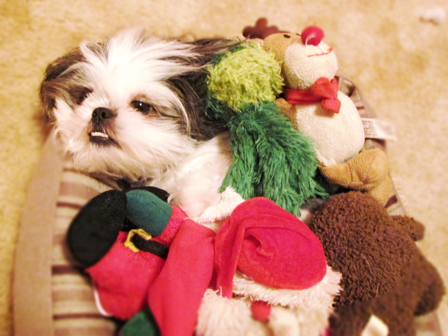 Shih Tzu Stuffed Toys
