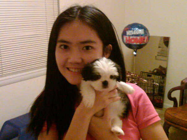 Tiny Shih Tzu Puppy and Owner