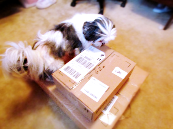 Shih Tzu on Boxes