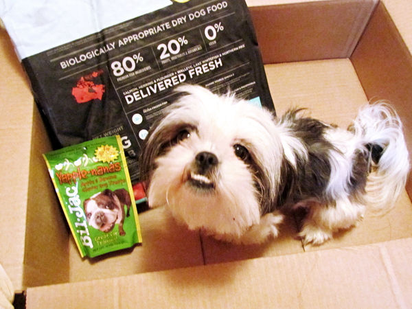 Shih Tzu in Box with Dog Food