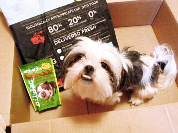 Shih Tzu in Box with Dog Food