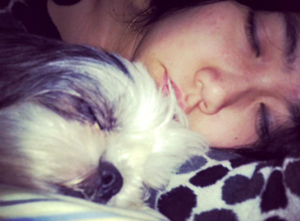 Shih Tzu Sleeping with Human