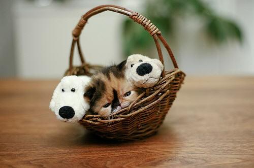 Calico Kitten in a Basket