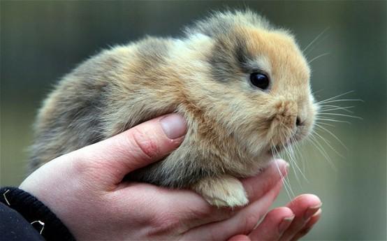 Earless Bunny