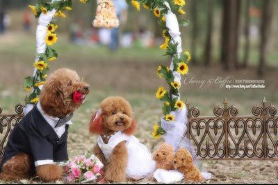 dog get married