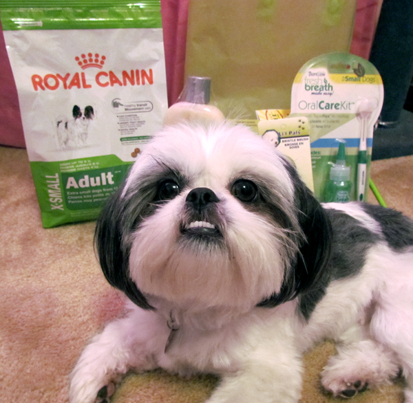 Shih Tzu in front of Royal Canin X Small Dog Food