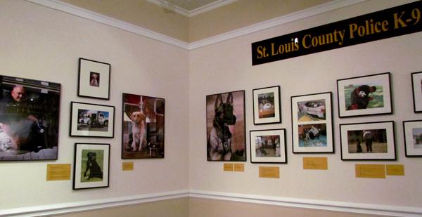 St. Louis K9 Dogs