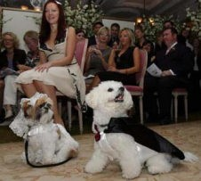 Maltese Dog Wedding