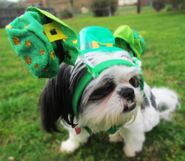 St. Patrick's Day Dog Costume