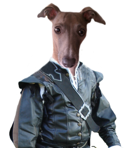 Vincent Italian Greyhound