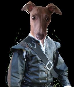 Vincent Italian Greyhound