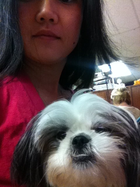 Gracie Lu Shih Tzu and Mom at work