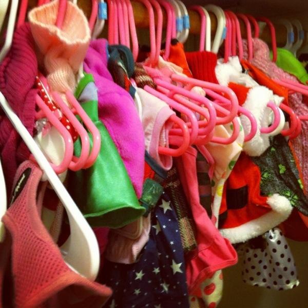 Dog Closet Full of Clothes