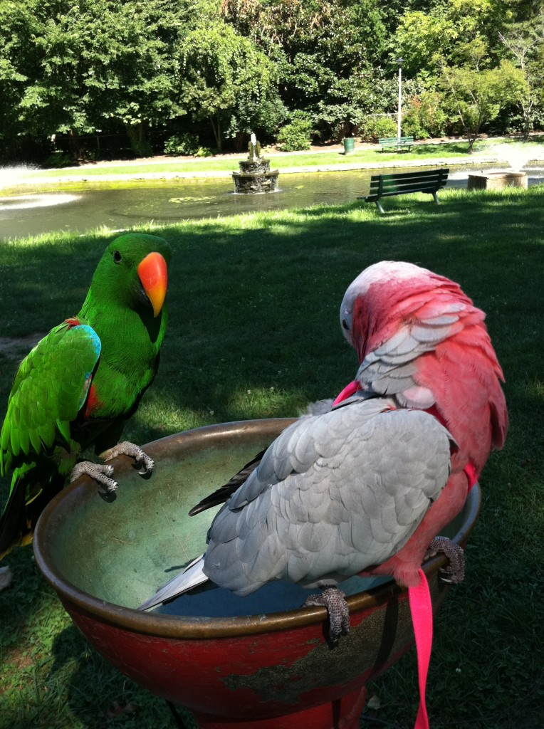 Mr. Bubbles, Cockatoo and Chaucer, Parrot