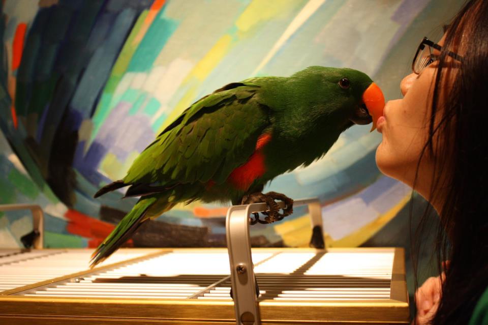 Chaucer the Aru Eclectus Parrot