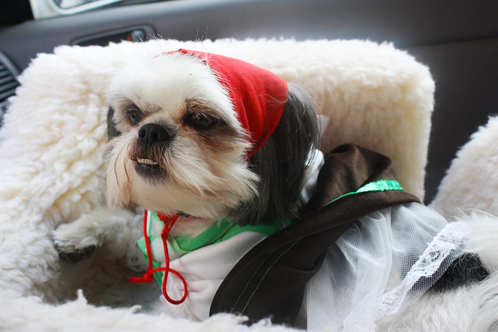 Gracie Lu Dressed Up Alpine Girl Beer Dog Costume