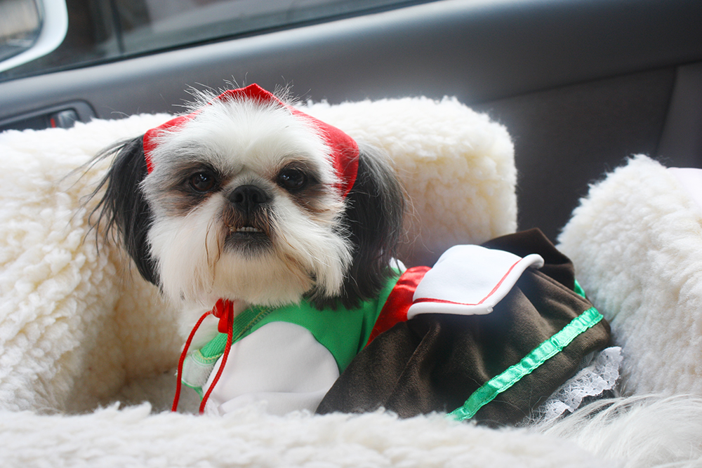 Shih Tzu Alpine Girl Costume