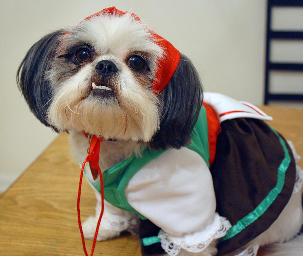 Shih Tzu Alpine Girl Costume