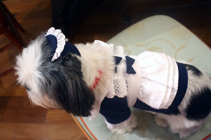 French Maid Dog Halloween Costume