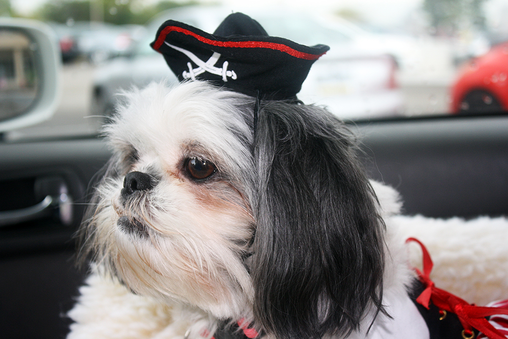 Shih Tzu Lady Pirate Dog Costume