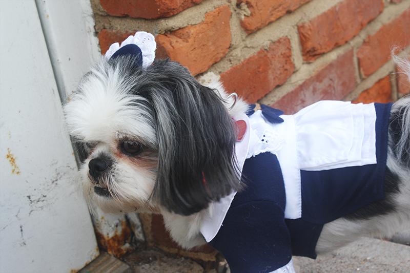 Shih Tzu Halloween Costume