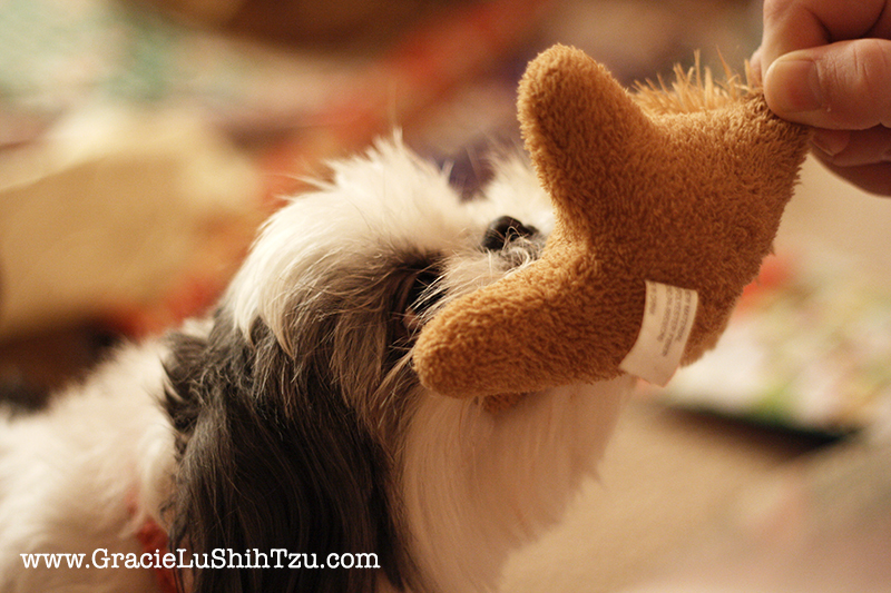 Gracie Lu Shih Tzu Playing with Toy