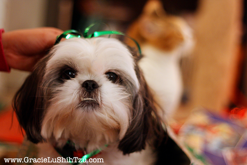 Shih Tzu Face with Green Christmas Bow