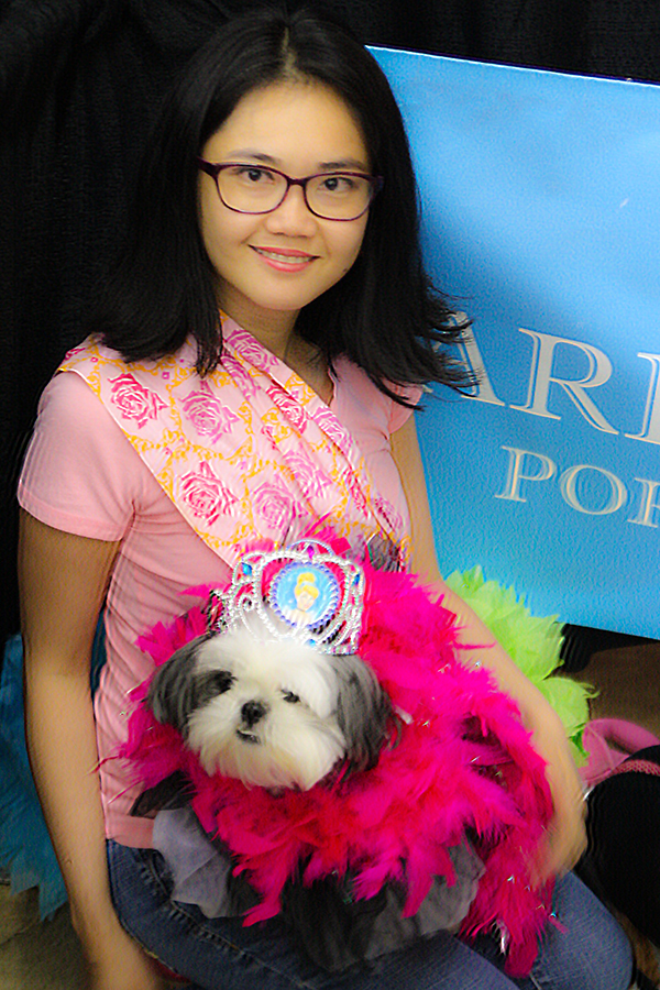 Gracie Lu Shih Tzu in Princess Tiara
