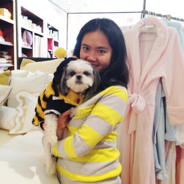 Gracie Lu Shih Tzu Bumble Bee