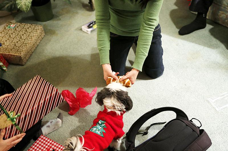 Gracie Lu Shih Tzu and a Stuffed Bone