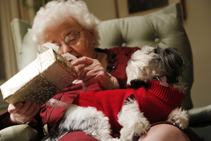 Gracie Lu Shih Tzu on Lap looking at grandma opening presents