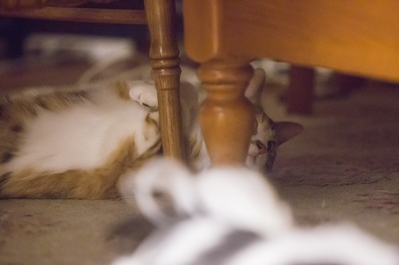 Clementine the Cat Under the Table